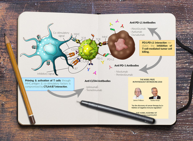 Immunotherapy infographic