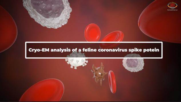 Feline coronavirus spike protein