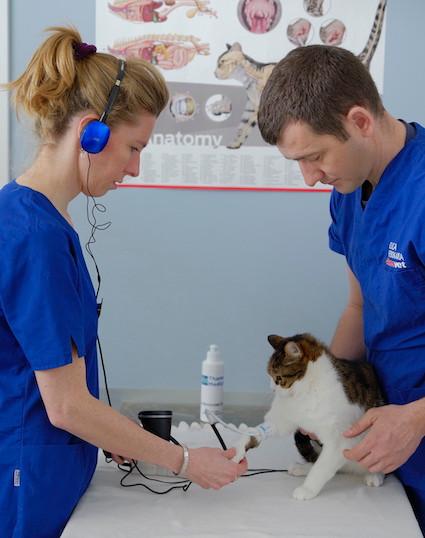 Bemavet misurazione pressione alta gatto