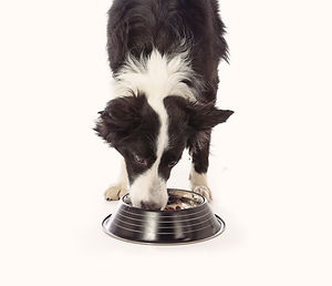 Cane gatto cibo dieta casalinga crocchette
