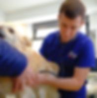 cane veterinario visita clinica