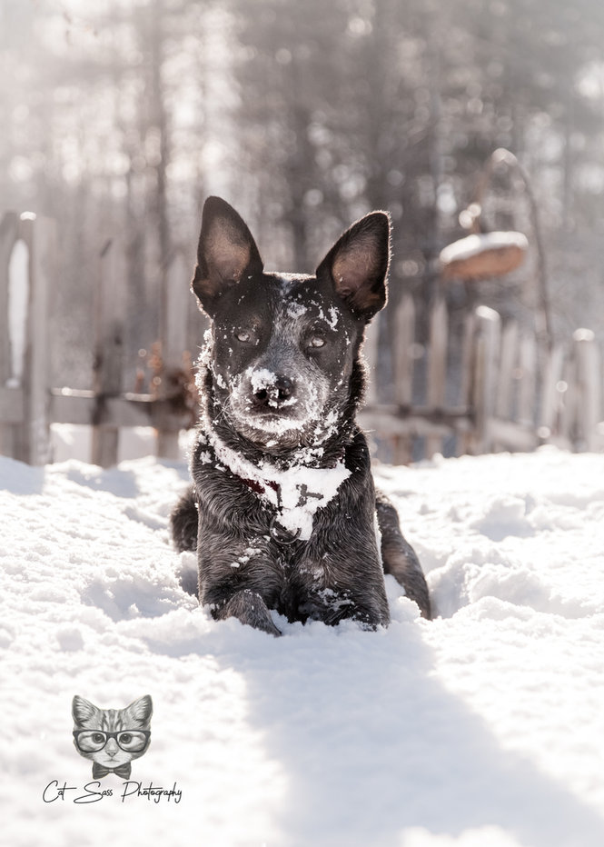 Majestic Snow Beast