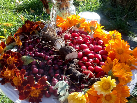 Есенно бране на билки- пет растения с мощно действие за укрепване преди зимата.