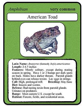 am toad card.jpeg