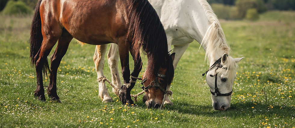 horse-alezan-brown-ride-mane_edited.jpg