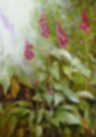 Foxglove.jpg