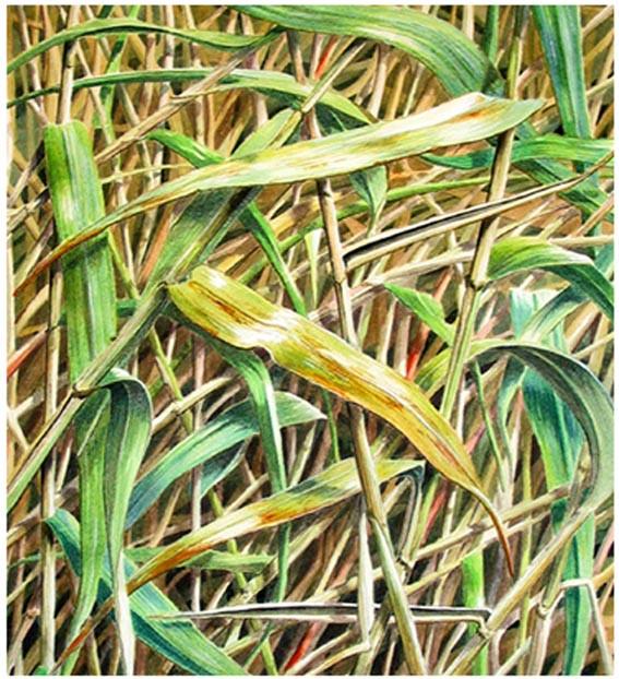Amongst Reeds 28 x 26 cm