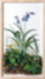 BLUEBELL2012.jpg
