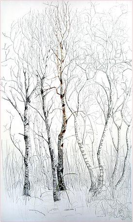 7Birchtrees.jpg
