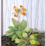 Primrose and Oxlip March 50 x 35 cm