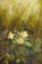 field-edge with primrose.jpg