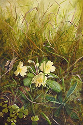 field-edge with primrose.jpg