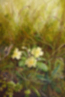 primrose solo.jpg