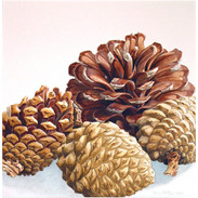 Monterey Pine Cones 20 x 20 cm