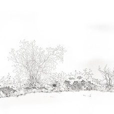 Plum, hazel, blackthorn and ferns