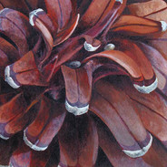 Monterey Pine Cone 20.5 x 20.5 cm