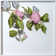 Camellia April  45 x 45 cm