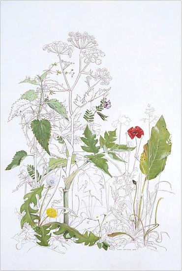 16The plants.jpg