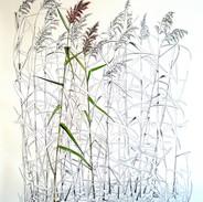 Common Reed 200 x 150 cm