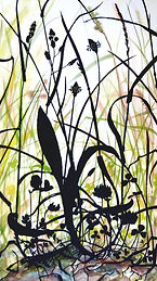 Meadow-plantain1.jpg