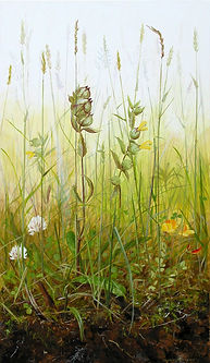 yellow-rattle solo.jpg