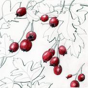 Hawthorn Berries 14 x 16 cm