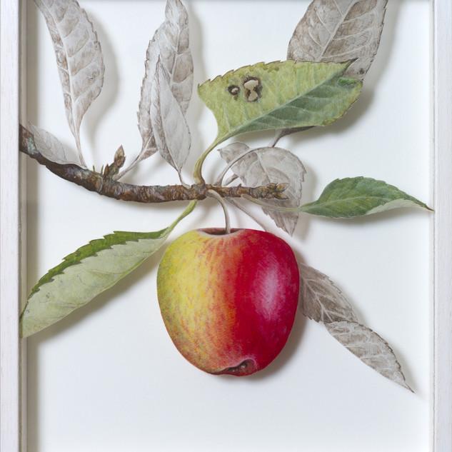 Katy Apple September  27 x 23.5 cm
