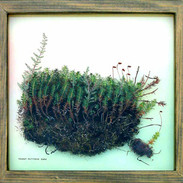 Common Moss 45 x 45 cm