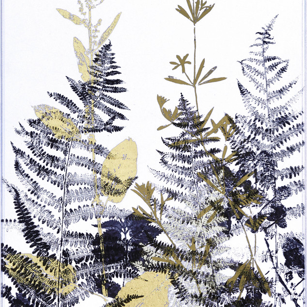 Hedgerow silhouettes with Cleavers and Ferns