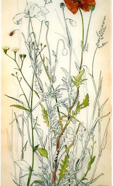 Poppy 70 x 30 cm
