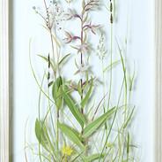 Marsh Helleborine 62 x 32 cm