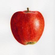 Red Apple 16 x 16 cm