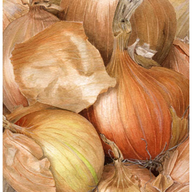 Onions 48 x 48 cm