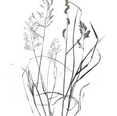 Hedgerow - Field