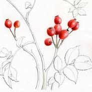 Rosehips 14 x 17 cm