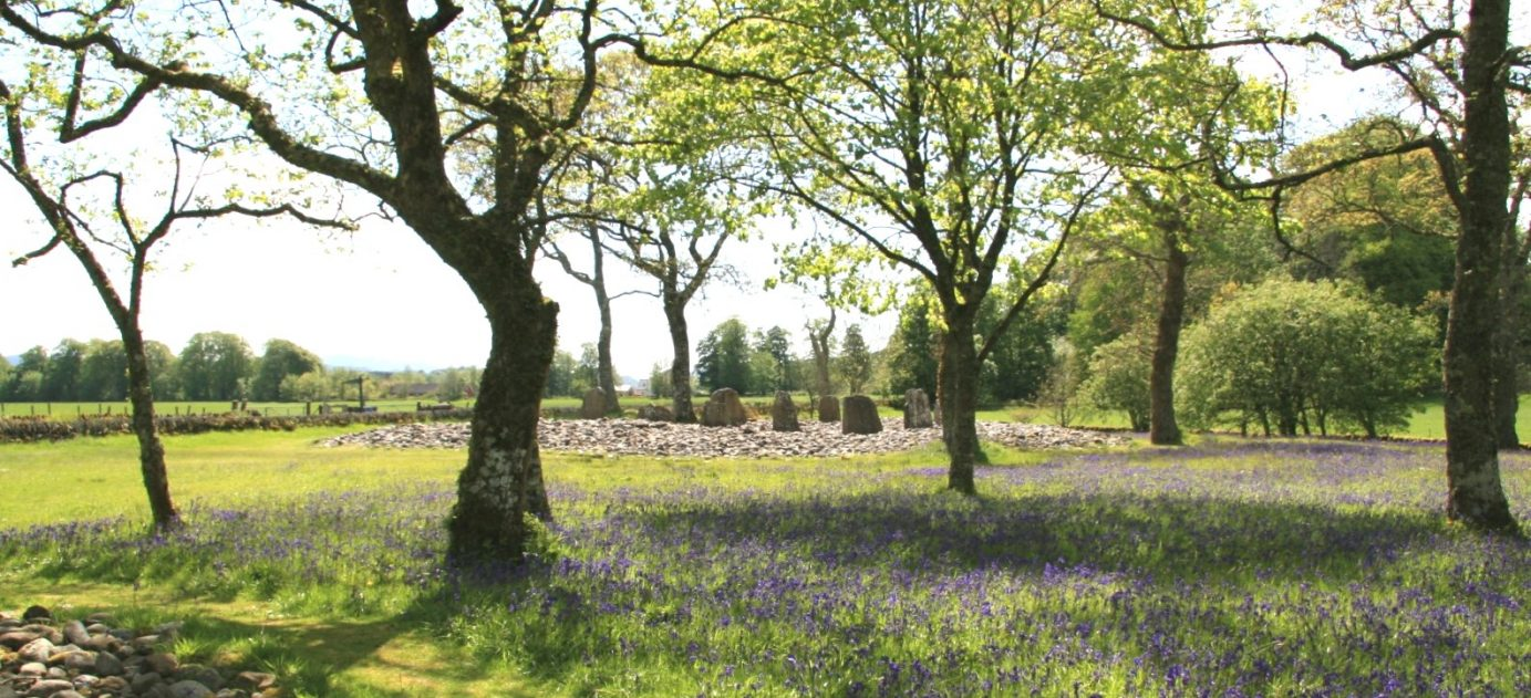 Temple-wood-bluebell-crop-e1491223403110