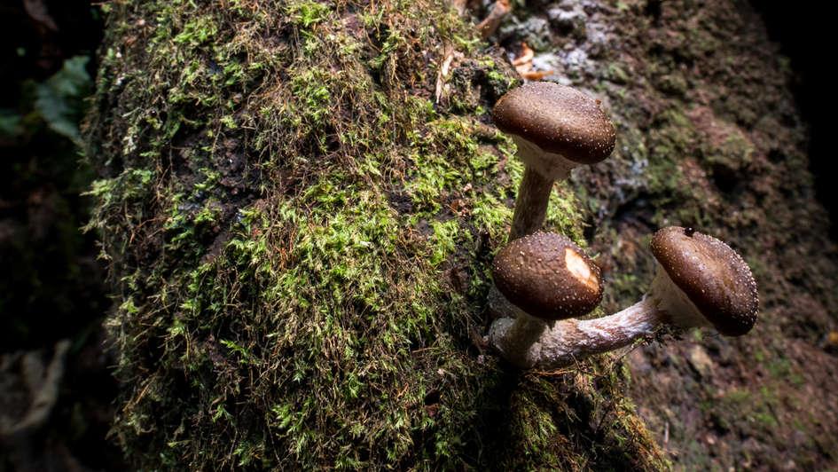 Fungi floor