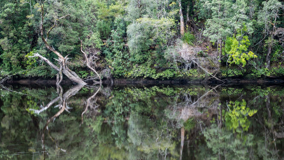 Reflections of Tarkine