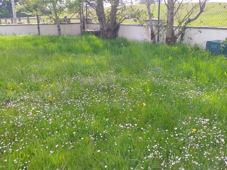 Our Wildflower Meadow for the Bees and other wildlife