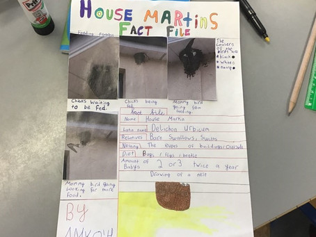 House Martins: Our exotic and mysterious friends