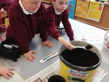 Experimenting with soil and plants.