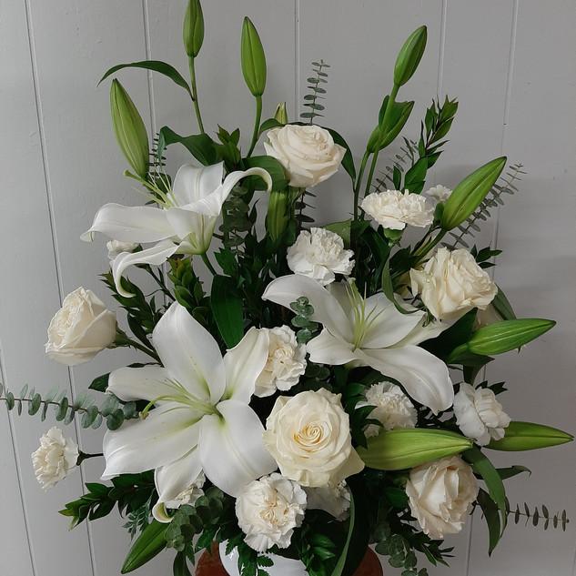 Eucalyptus White