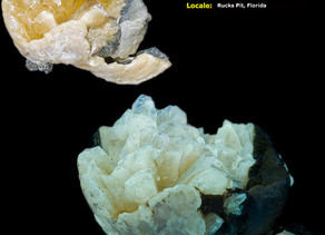 Fossilized Clam (Calcite) from Rucks Pit, So. Fla.