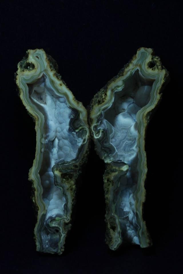 Agatized Coral - LW & SW
