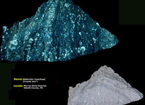 Calcite - Fossilized Crinoids - Murray Shale Outcrop, DeKalb Co. TN
