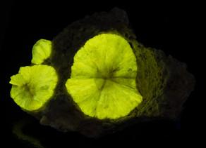 Radiating Quartz Nodules - La Sassa, Italy