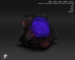 Wish Wang - 939655CD-73AB-41ED-BC53-A6A9
