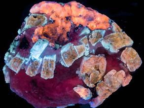 Forsterite from Sar-e-Sang, Badakhshan, Afghanistan