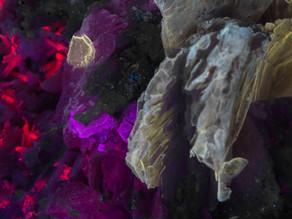 Leucophanite, Calcite, Polylithionite - Mount St. Hilaire, Quebec, Canada