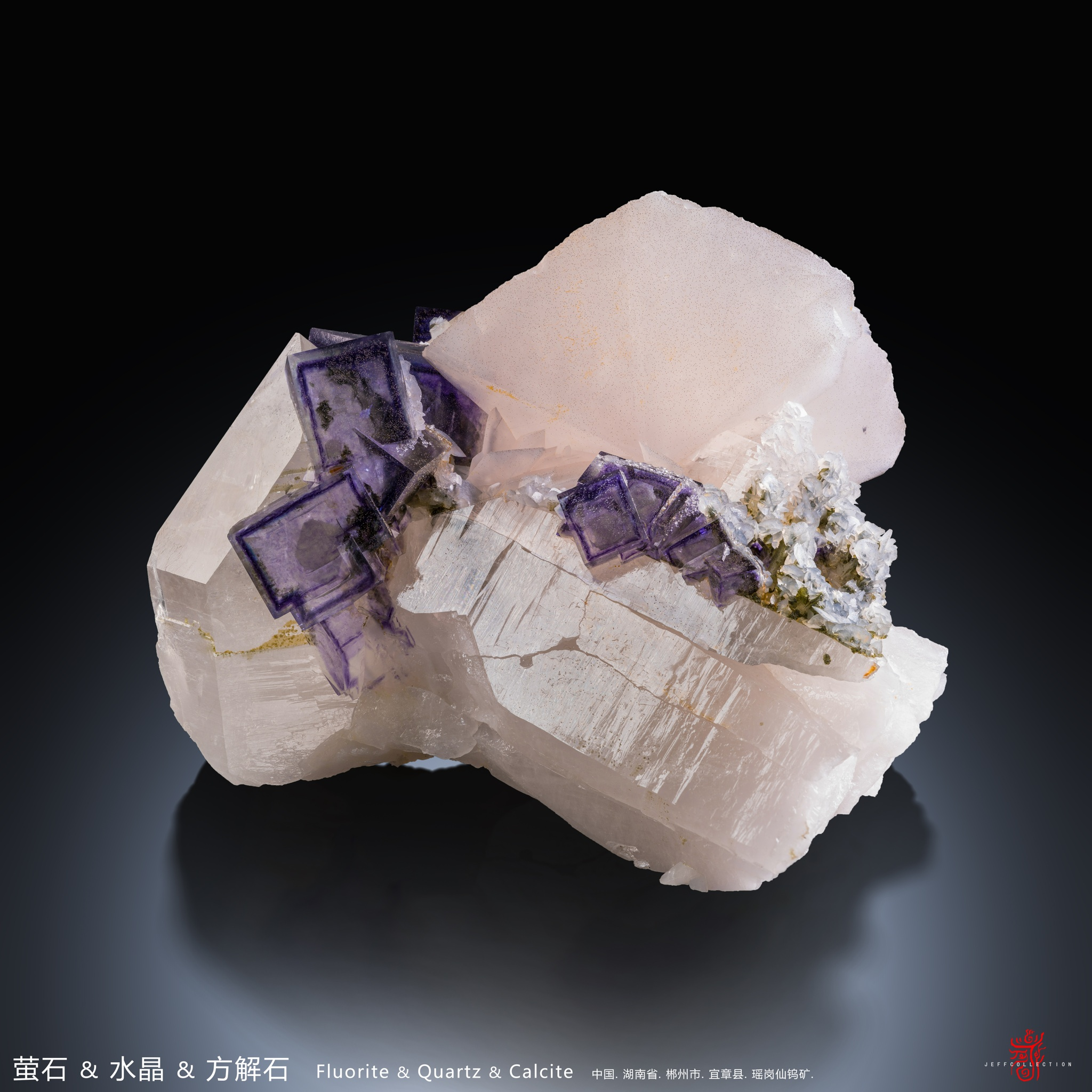 Wish Wang - 2B525091-6C94-4E1B-91D1-725F